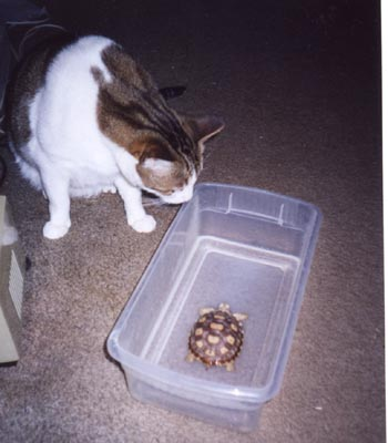 Ti'i the cat and Geode the tortoise